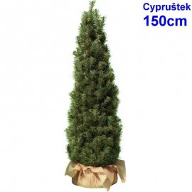 Cypruštek 150 cm
